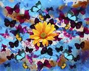 Daisy And Butterflies