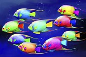 Colorful Fishes 2