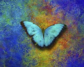 Color and butterfly 1