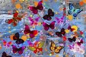 Butterflies Season
