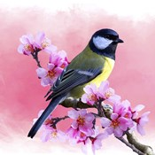 Spring Bird 3A
