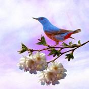 Spring Bird 3B