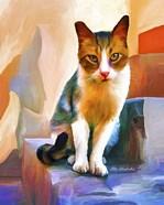 Cat 1A