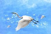 White Birds And Blue Sky