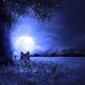 Moon Night And Wolf