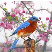 Spring Bird 6NV