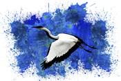 Bird Collection 10