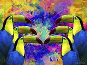 Colorful Birds A1A