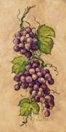 Vintage Grapevine I