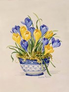 Blue and White Porcelain Crocus