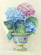 Hydranga Blooms II