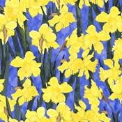 Fertile Rising - Daffodils