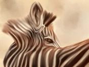 Zebra Looking Over Shoulder