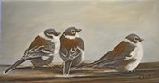 Chickadees on the Deck