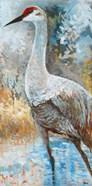 Sandhill Cranes I