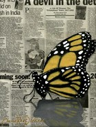 Butterfly On My Newspaper