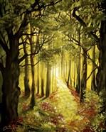 Sunlit Forest Path