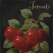 Medley Tomato
