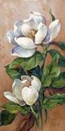 Magnolia Accents I