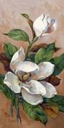 Magnolia Accents II