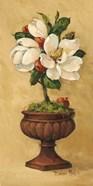 Magnolia Topiary I
