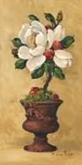 Magnolia Topiary II