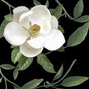 Sweet Magnolias II
