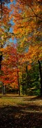 Autumn trees in a forest, Orchard Park, New York