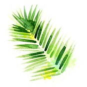 Tropical Icons Palm Frond