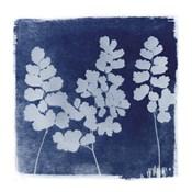 Flora Cyanotype II