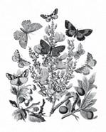 Butterfly Bouquet II Linen BW II