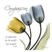 Tulips Compassion