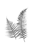Monochromatic Ferns 1