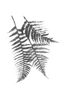 Monochromatic Ferns 2