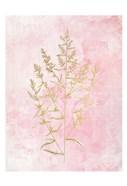 Botanical Pink 1