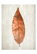 Copper Leaves 1