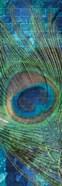 Urban Peacock 1