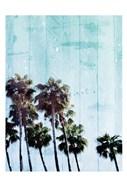 Palm Cool blue