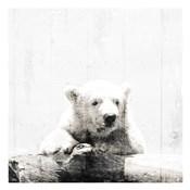 Polar Looks White