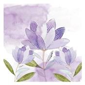 Purple Delight 1