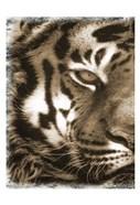 Tiger Claw 1