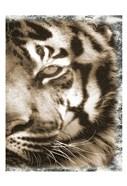 Tiger Claw 2