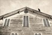 Fort Halifax Crow
