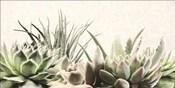 Soft Succulents II