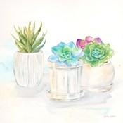 Sweet Succulent Pots IV