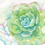 Sweet Succulents IV