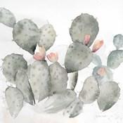 Cactus Garden Gray Blush I