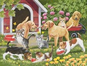 Puppies and Kittens - Spring and Summer