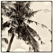 Palm Tree Sepia II