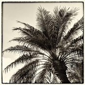 Palm Tree Sepia I
